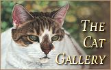 Cat Portraits Gallery