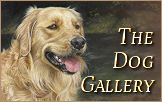 The Dog Portraits Gallery