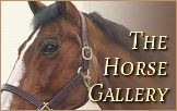 The Horse Portraits Gallery
