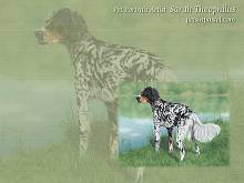 Setter Free Dog Wallpapers