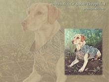 Labrador Retriever Dog Wallpapers