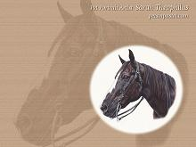 Free Desktop Horse Wallpapers
