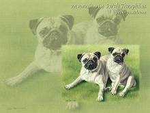 Pug Dog Wallpapers