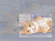 Ginger Tabby Cat Wallpaper