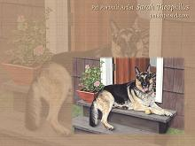 German Shepherd Dog Wallpapers