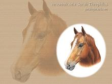 Sorrel Horse Wallpapers